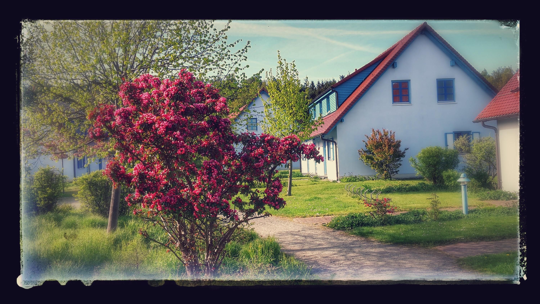 Apartment Dranske Bakenberg auf Ruegen: Insel Ruegen Appartement Sommerfeld