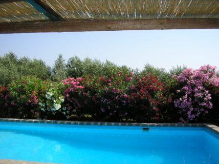 Ferienhaus Frascati: Villa Limonaia mit Pool bei Frascati/Rom